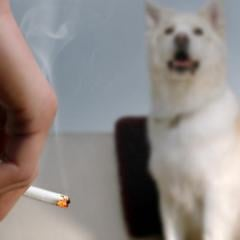 Pets and Tobacco